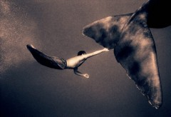 gregory colbert,photo,ashes and snow